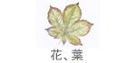 花、木の葉